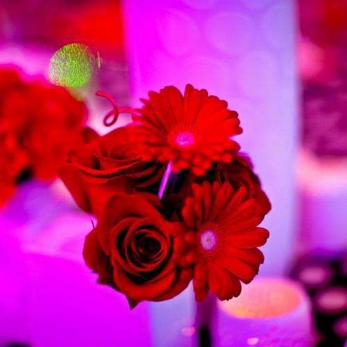 BI Verizon Pop Art red flowers 500 x 500