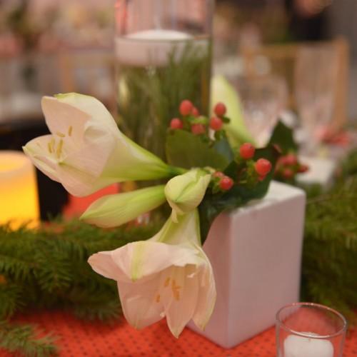 Carlson Holiday 2015 amaryllis cube