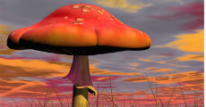 mushroom 1 230-x-120