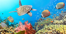 under the sea 230-x-120