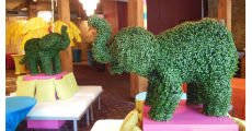 Elephant Topiaries 230 x 120