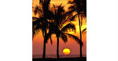 TropicalSunset 230 x 120